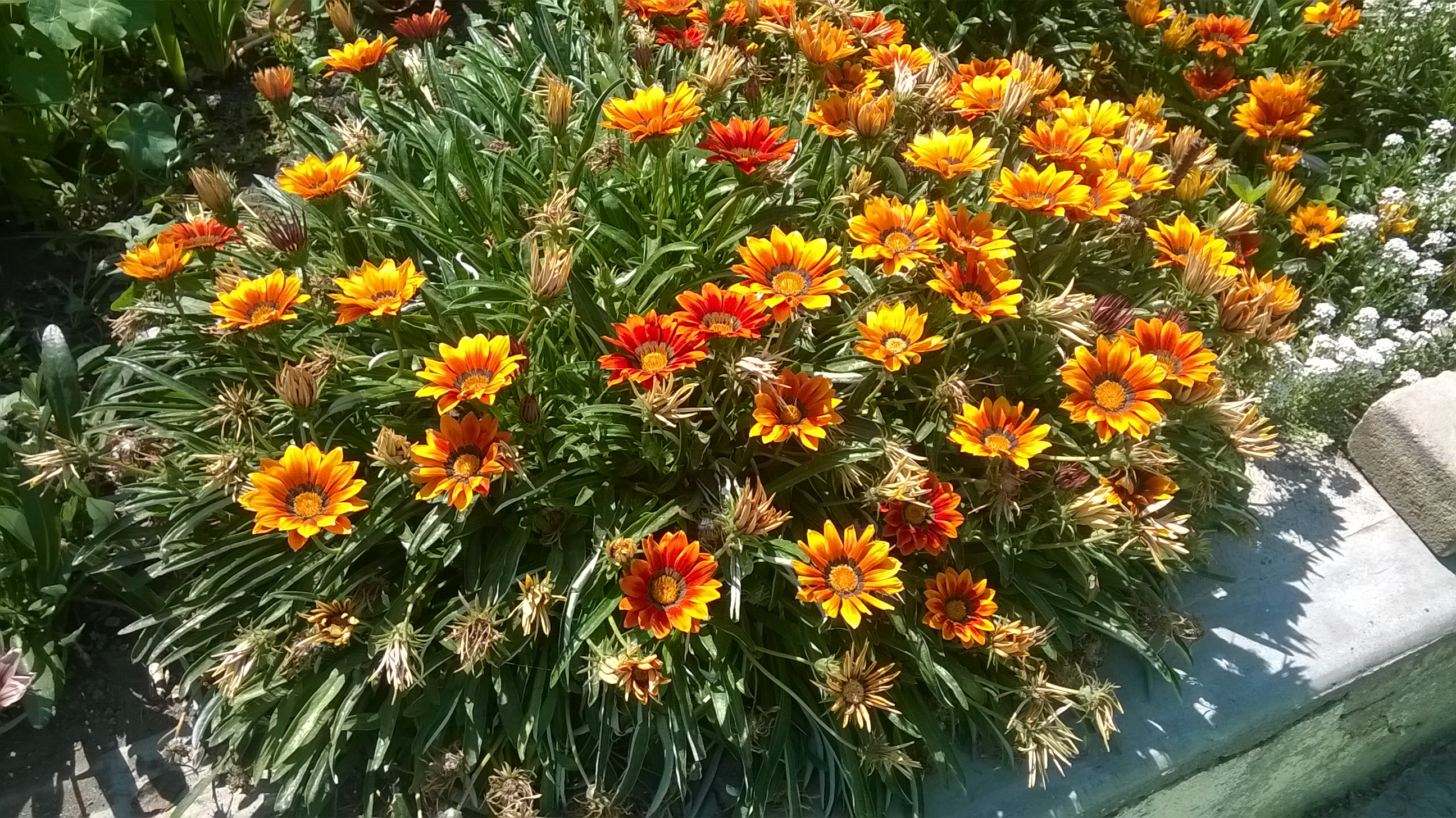 Plantas que soportan el sol stunning plantas tropicales - Plantas que aguanten el sol ...